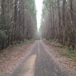 Article published: Roadtrip Tasmania