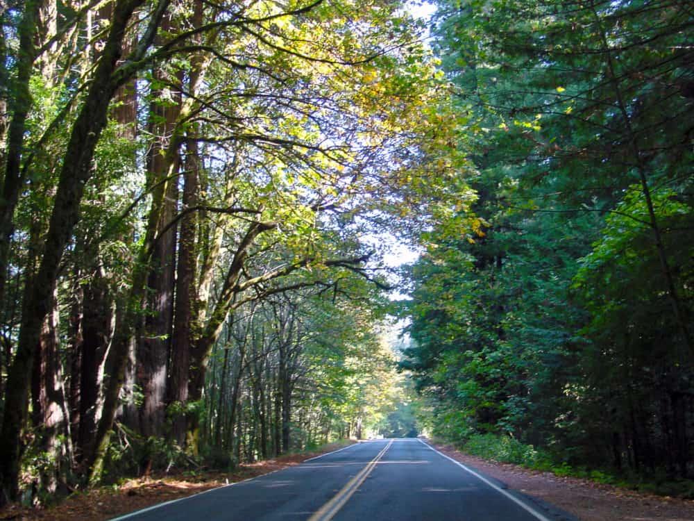 Redwoods road