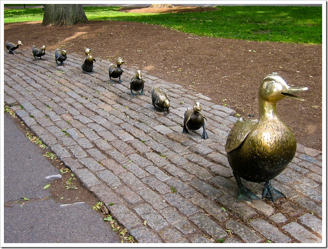 Make way for ducklings in Boston
