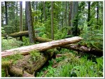 Nature, Vancouver Island