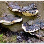 Mushrooms on Vancouver Island