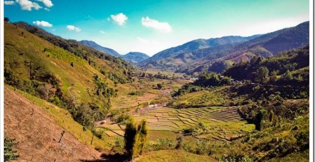 Rice paddies near the Laos border