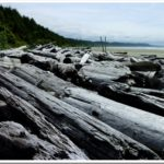 Bleached logs, Vancouver Island