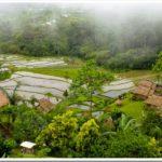 Misty rice fields, Bali