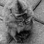 The inhabitants of Ubud's Monkey Forest