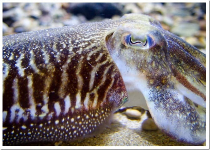 New friend at the aquarium