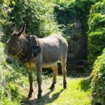 Piazzaga donkey