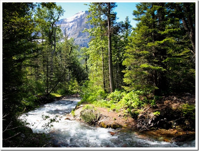 Mountain stream, Glacier National Park