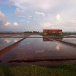 Flooded paddies in Kampot