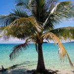 Palm tree, Koh Rong