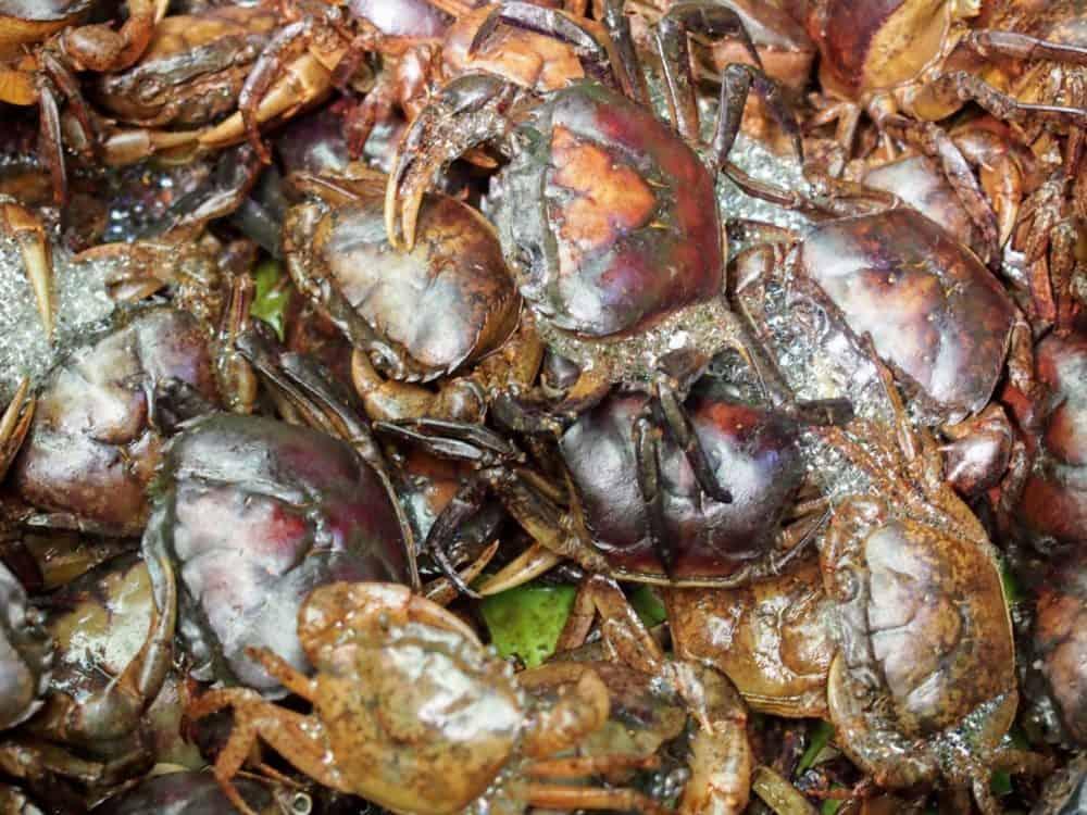 Crabs, Tra Vinh