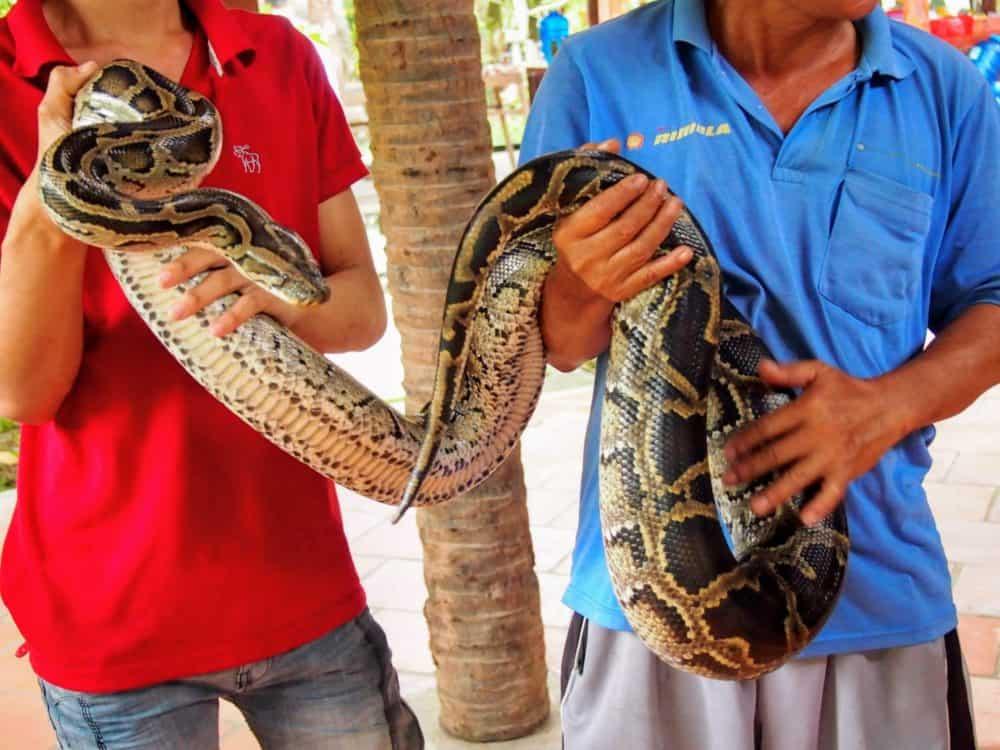 Cuddle my python