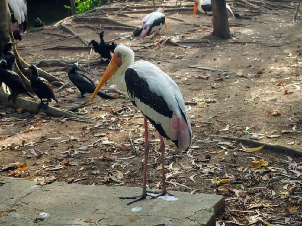 Sad stork