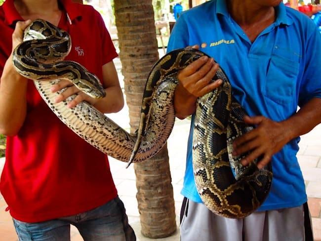 Snake, near My Tho