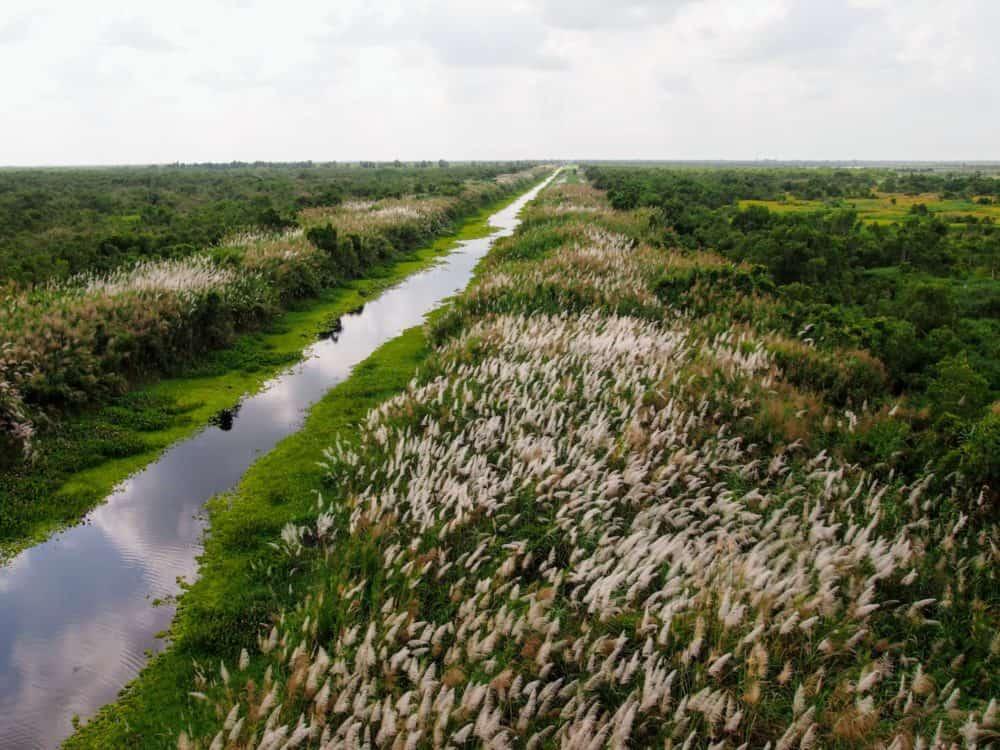 Wetlands, Longtails at U Minh Thuong national park