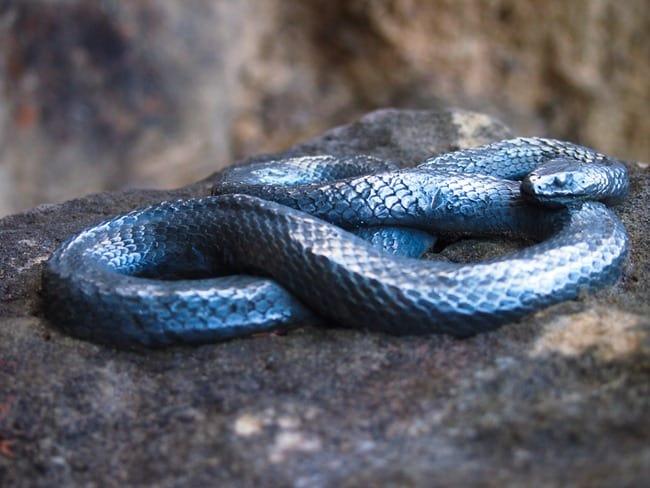 Blue Mountains - Snake sculpture