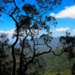 Beauty in the Blue Mountains