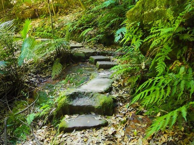 Blue Mountains path