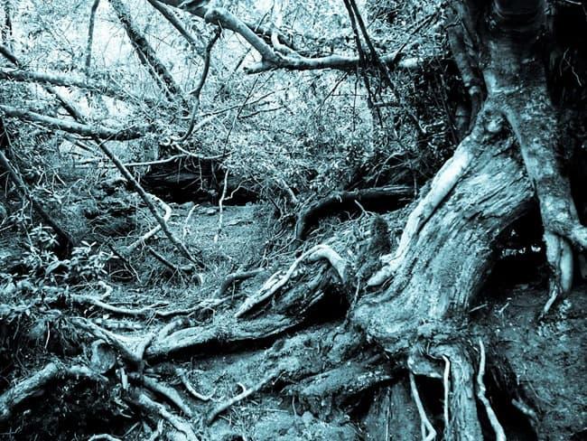 Cradle Mountain tree