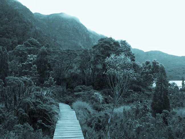 Moody Cradle Mountain path