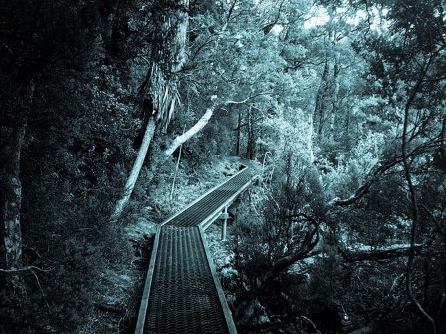 Raised path, Dove Lake