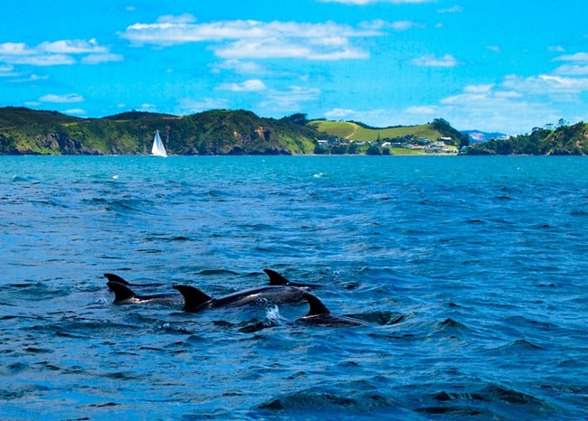 Swim With Dolphins New Zealand North Island