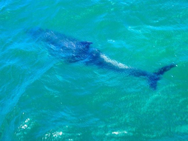 Underwater dolphin, Bay of Islands