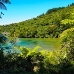 Hiking the Queen Charlotte Track: the easy bit