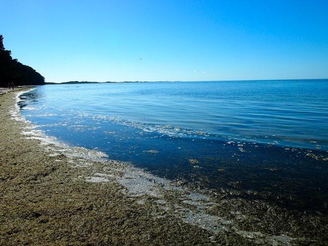 Seaweed, Farewell Spit