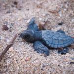 The Friday Photo #185 – Go little turtle go