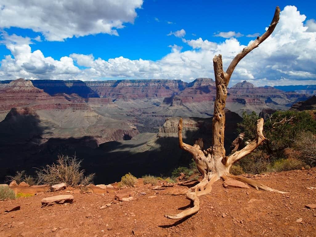 Dead tree, Cedar Ridge