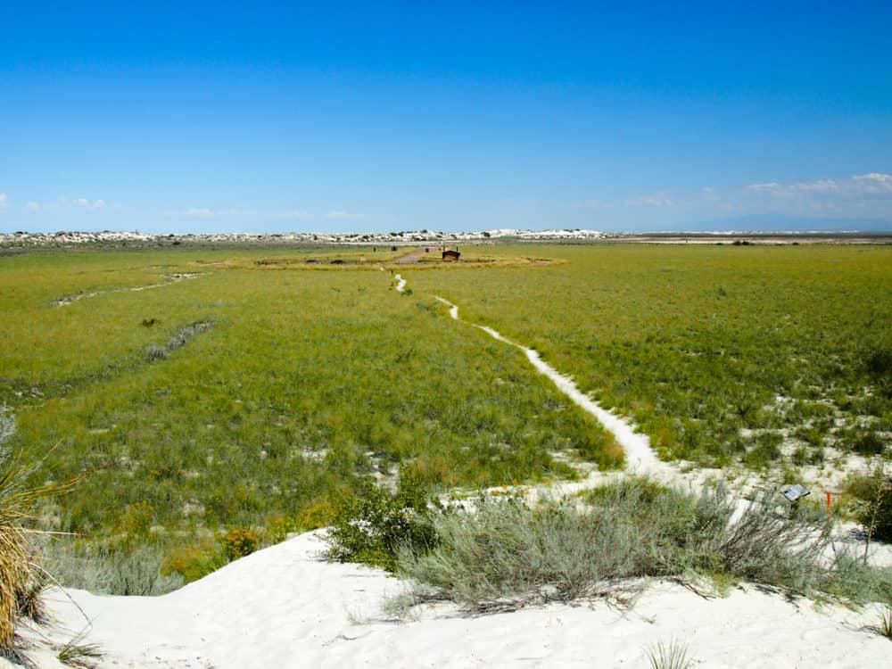 White Sands - grass