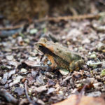 The Friday Photo #195 – Tiny Frog at Coba