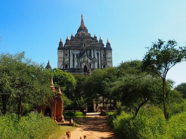 Dogs at temple, Bagan