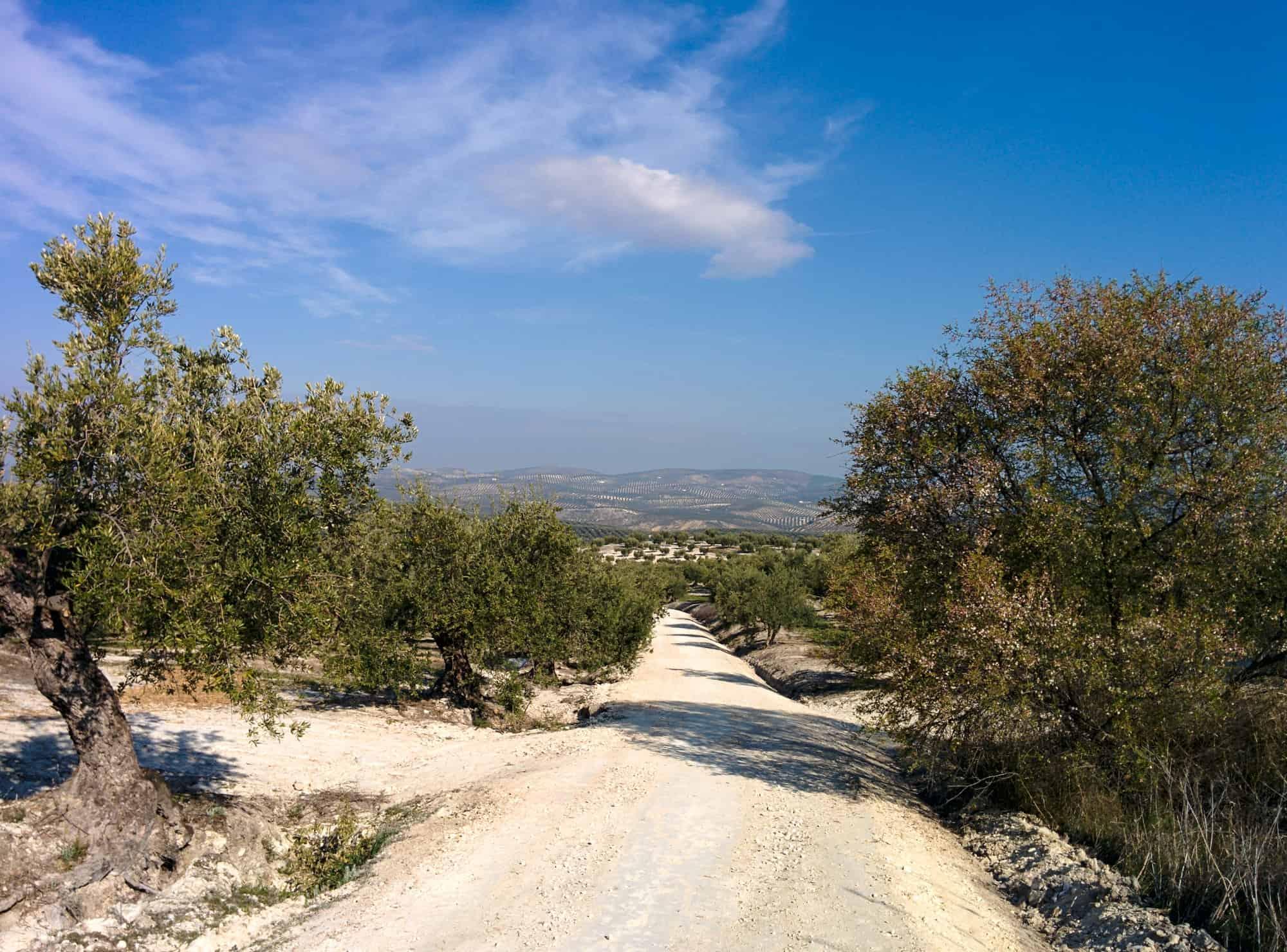 Camino dirt track