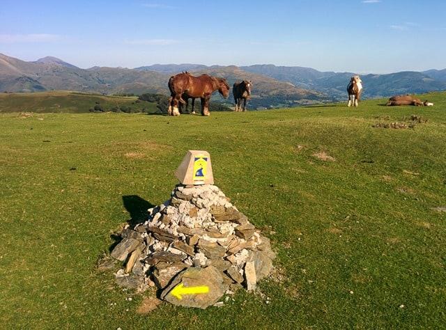 Camino - follow the arrows