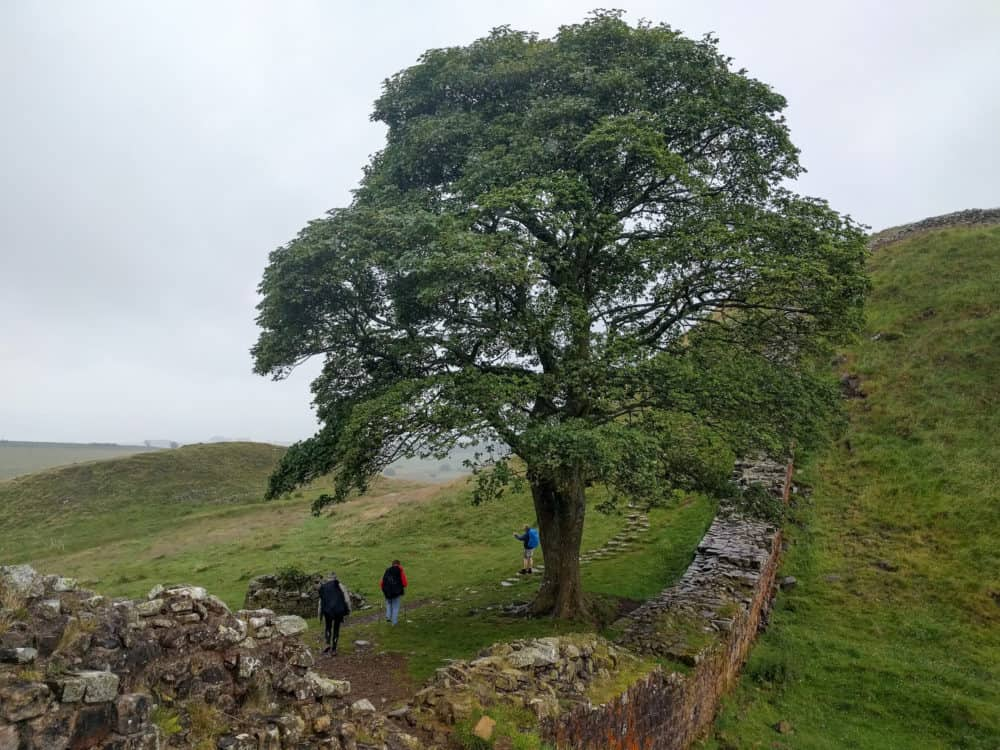 Hadrian's Wall Trail, Sycamore Gap, day 3