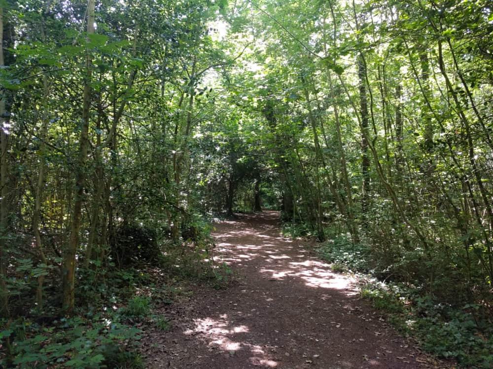 Leigh Woods, Bristol