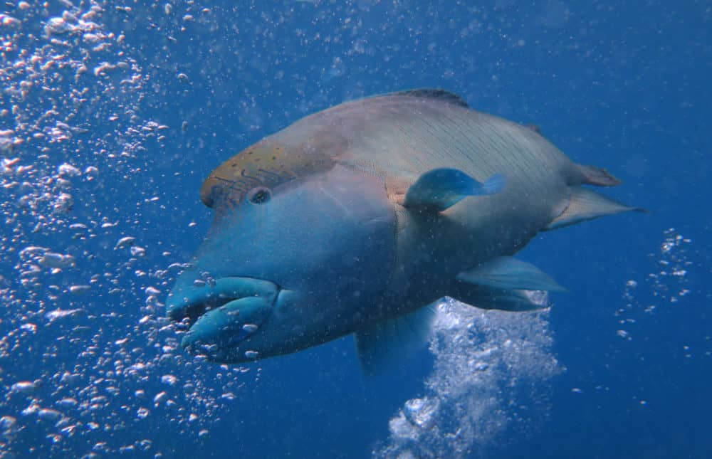 Great Barrier Reef - Frank