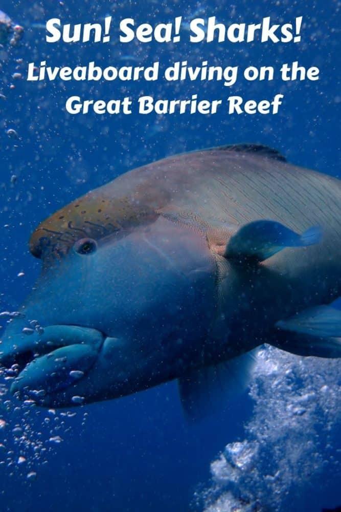 Great Barrier Reef liveaboard diving