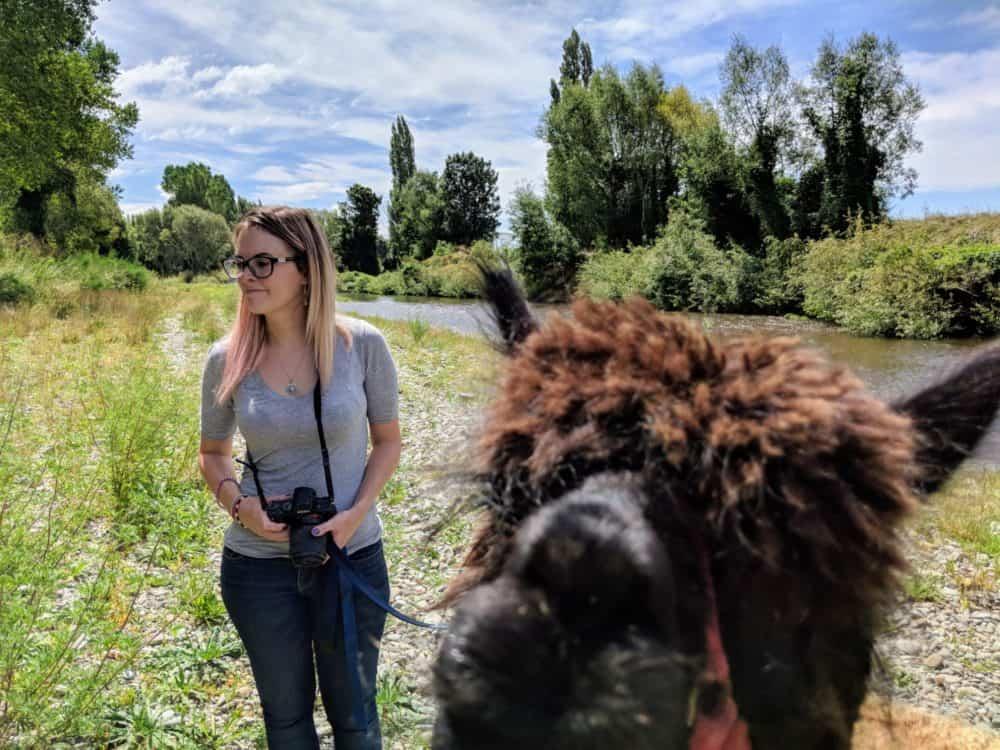 Photobombing alpaca