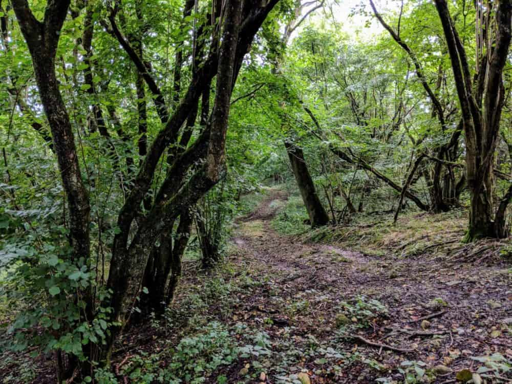 Muddy forest path, Cotswold Way