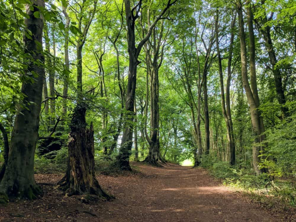 Forest path, Cotswold Way
