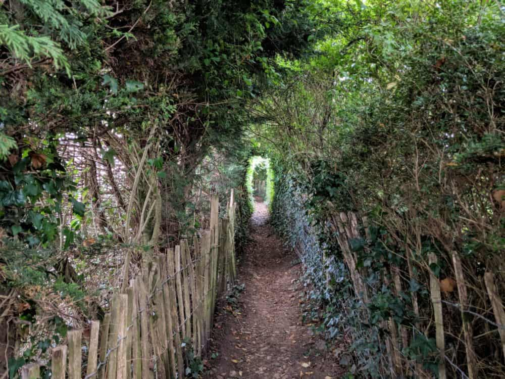 Tunnel of trees, Cotswold Way
