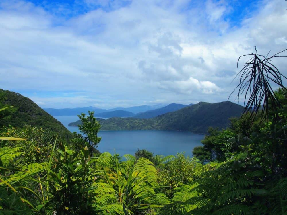View over Resolution Bay, Queen Charlotte Track