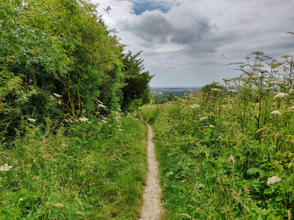 The trail. South Downs Way