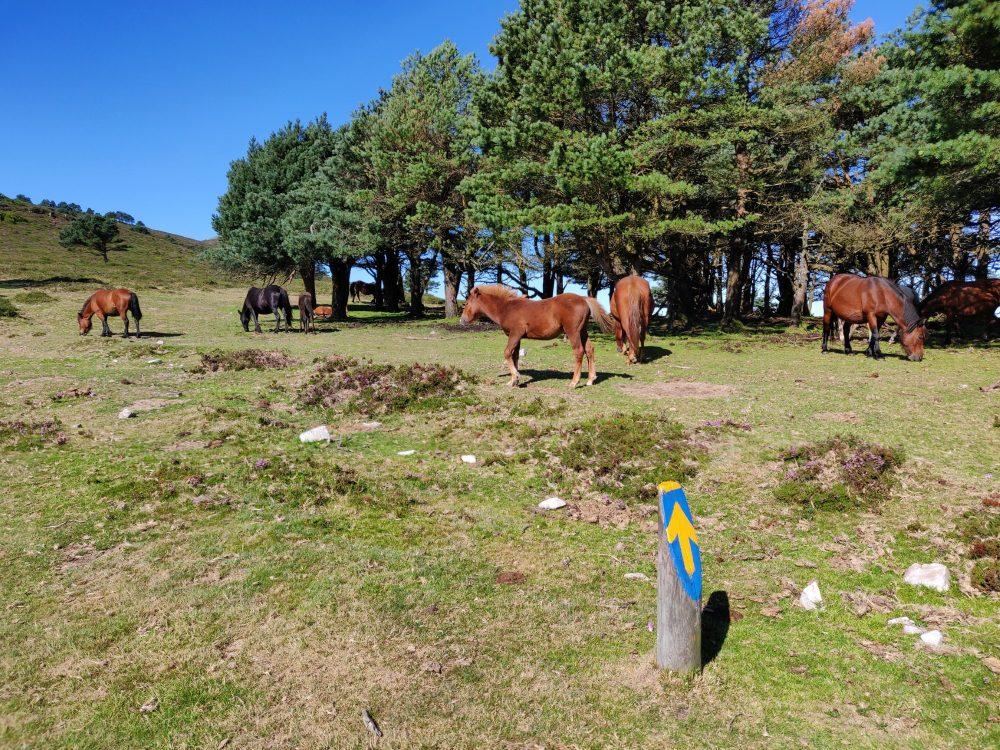 Asturian horses on the Hospitales