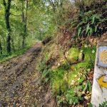 Camino arrow on dirt trail