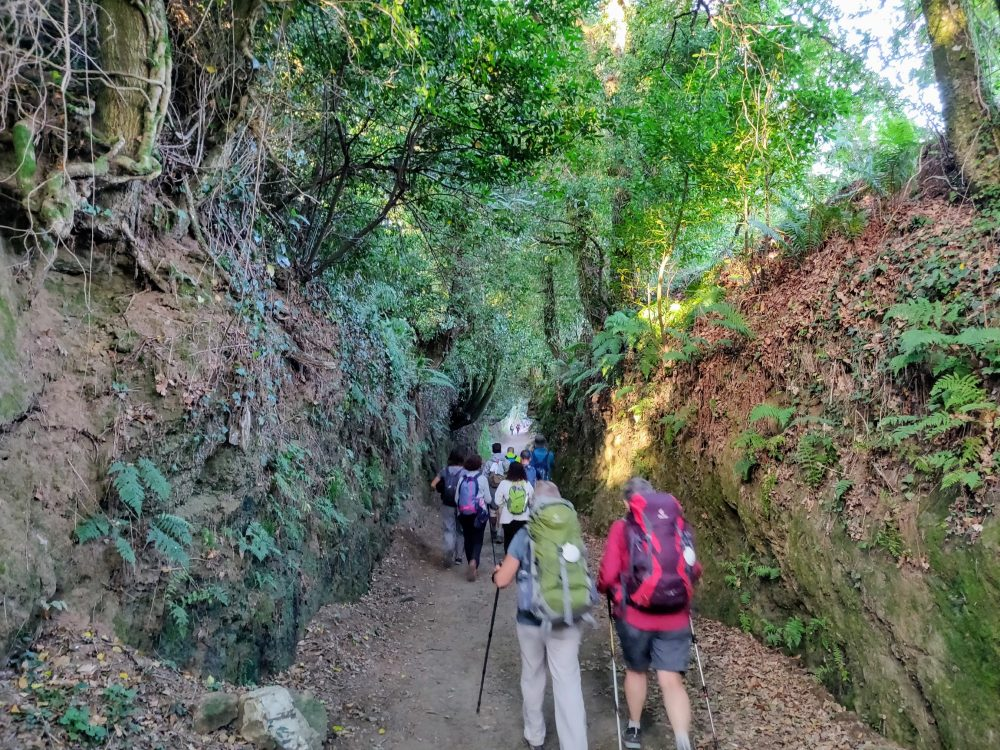 Line of walkers on the Camino