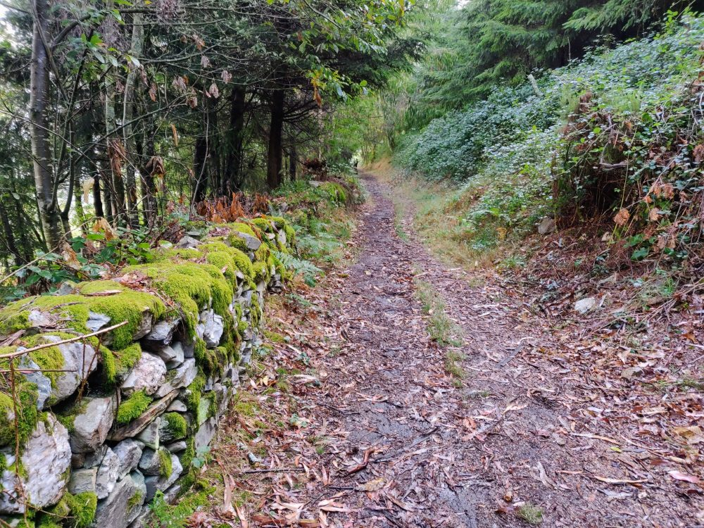 Soft trail and mossy wall on the Primitivo